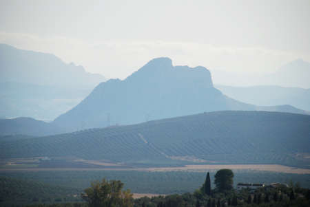 olive groves: View of Lovers Mountain with olive groves in the foreground, Antequera, Malaga Province, Andalusia, Spain, Western Europe. Stock Photo