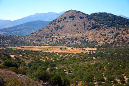 olive groves: Elevated view of olive groves in the Greek countryside near Elounda, Crete, Greece, Europe.