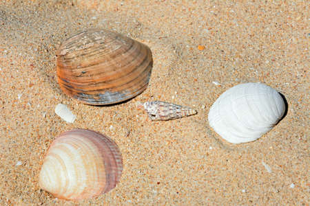 Four seashells on the sand, Praia da Rocha, Algarve, Portugal, Europe.