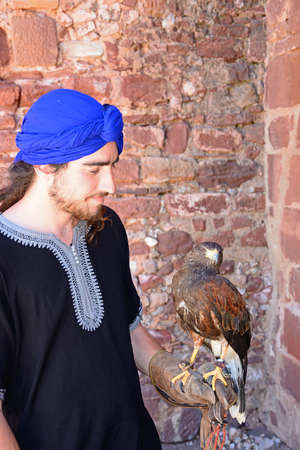 Handler holding a Harris Hawk in the castle courtyard, Silves, Portugal, Europe.