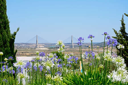 Large lilac and white flowers with the Guadiana international bridge which links Portugal to Spain and surrounding countryside on both sides of the river of Spain and Portugal to the rear, Castro Marim, Algarve, Portugal, Europe.