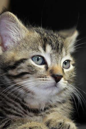 catechism: kitten Stock Photo