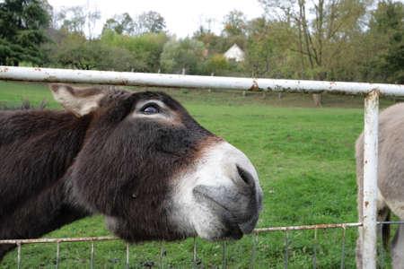 ass donkey: Donkey ass gold