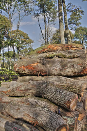 woodpile: Woodpile in forest, Picardy Region of France Stock Photo