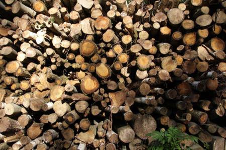 wood pile: Wood pile