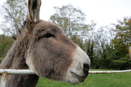 jackass: ass or donkey Stock Photo