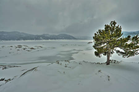 joshua: Isolated tree in a winter landscape, Pyrenees Orientales