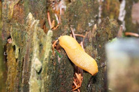 pest control: slug