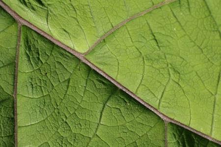 Limb of leaf