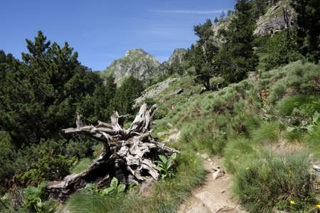 Footpath in Pyrenean mountains in Ariege, Occitanie in south of France