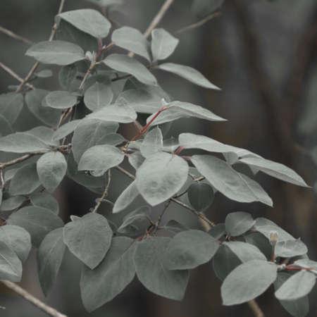 Leaves background in Forest Banco de Imagens