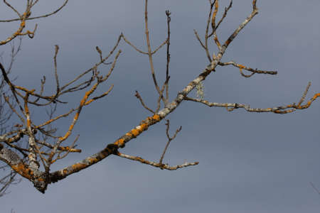 branch and bud of tree in winter Banco de Imagens