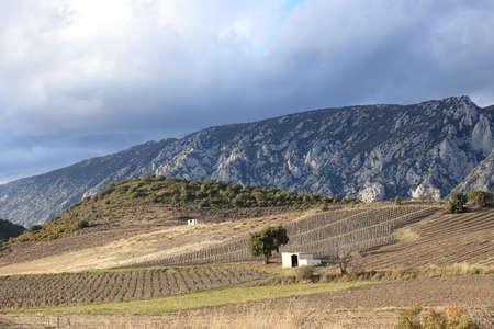 mediterranean vineyard in Fenouilledes. Pyrenees orientales in south of France