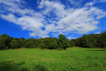 spring meadow in Pyrenean, Aude in the southern of France Stockfoto
