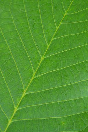 Close-up photograph of leaf