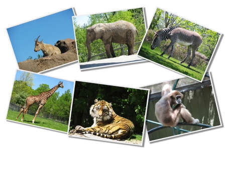 Bunch of animals photographs Stock Photo