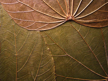 Background with dry leaves Stock Photo