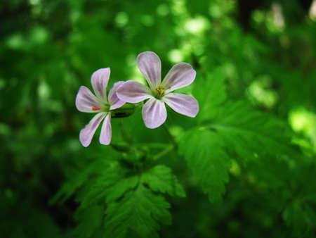 sepals: Purple flower over blur background