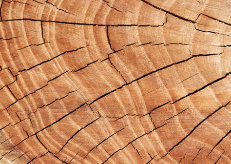 Texture of tree stump photo