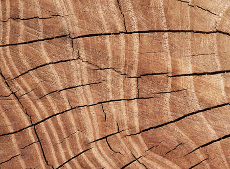 Texture of tree stump Stock Photo