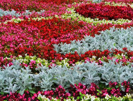 Flowers seamless background photo