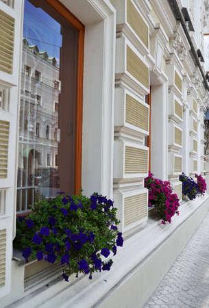 Flowers on the windows