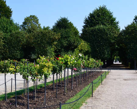 Park of roses Stock Photo - 15223528