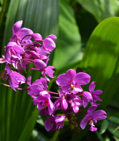 mothering: Close-up of Purple Orchid