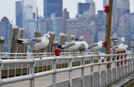 Seagulls standing near the seashore