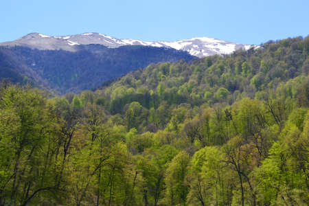 Mountains and forest in the spring