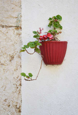 Flowerpot on the white wall