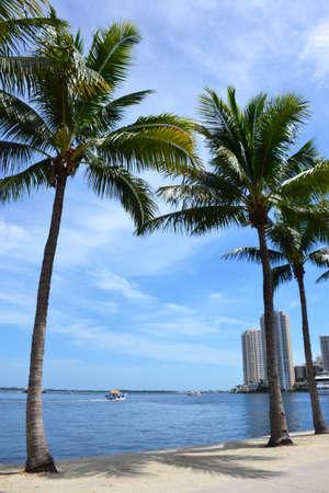 Palms at Miami beach, Florida Stock Photo