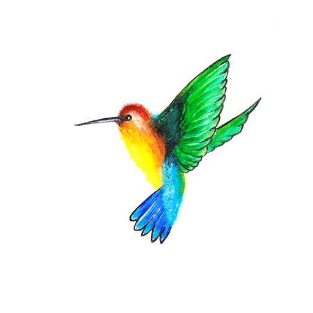 Humming-bird photo