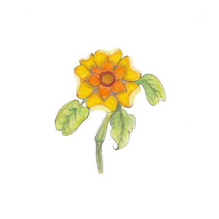 dessin fleur: Dessin fleurs Banque d'images