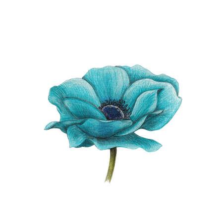 beautyful: blue anemone