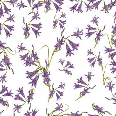 bluebell: Bluebell pattern on white background Stock Photo