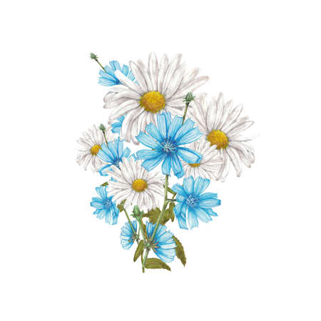 Chamomile and chicory flowers