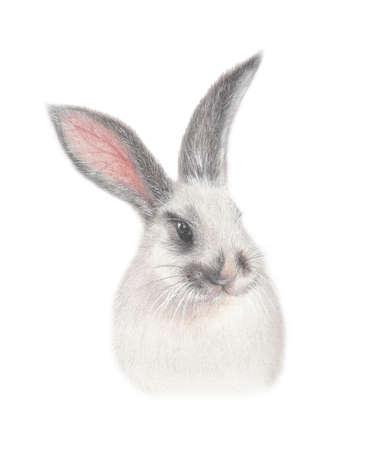 fluffy: Fluffy bunny