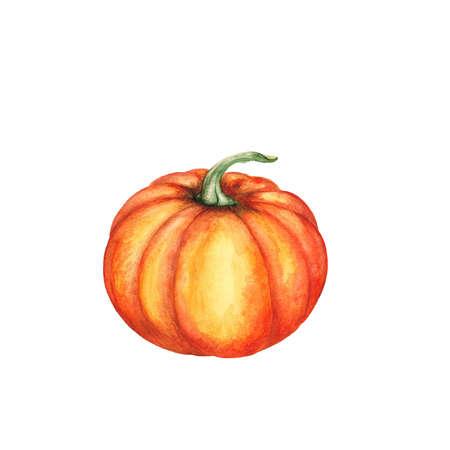 illustration: Pumpkin illustration