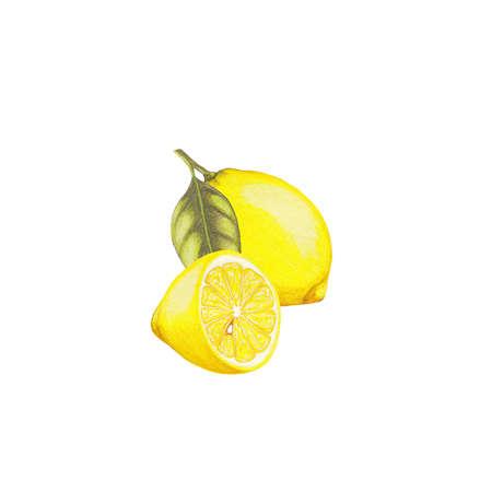 limon: Lemon illustration