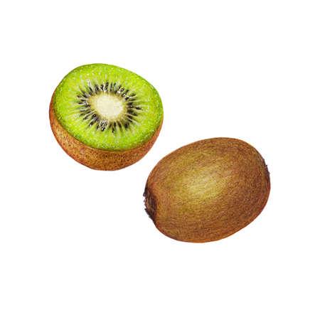 mixedmedia: Isolated illustration of kiwi fruit