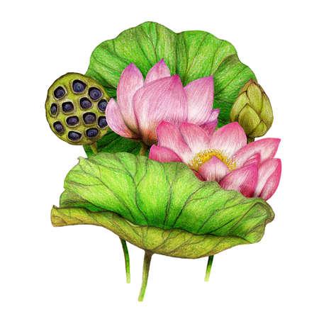 Hand drawn illustration of lotus bouquet