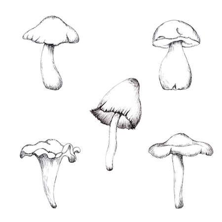 Botanical set of mushroom monochrome illustrations