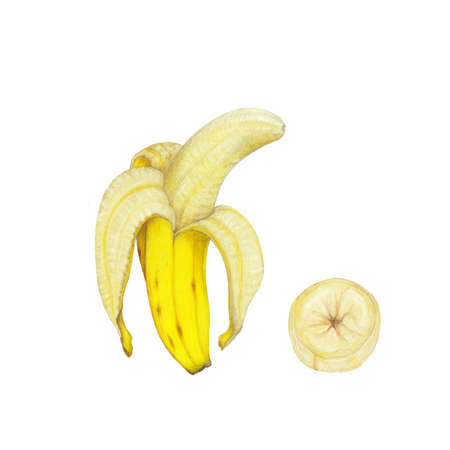 Isolated realistic illustration of bananas