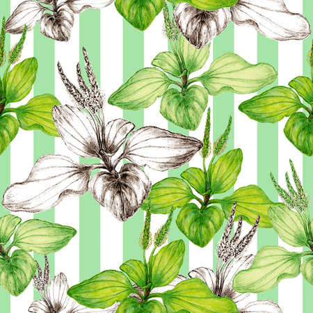 Hand drawn botanical seamless pattern of plantain plant