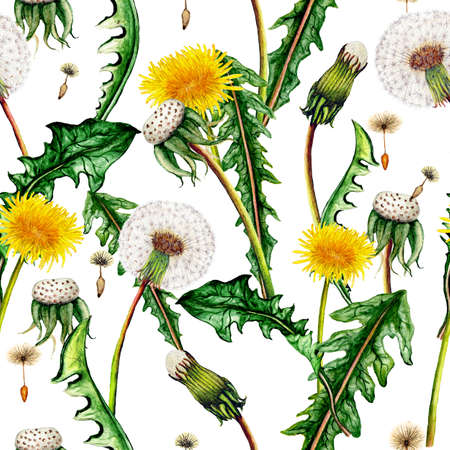 Seamless botanical pattern of watercolor dandelions Stok Fotoğraf