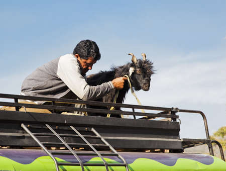 crop margins: landscape in Jammu Kashmir man and his goat travelling accross region on the roof rack of a colorful mini bus Stock Photo