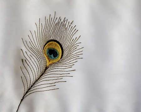 negative area: Horizontal, landscape, peacock embroidered feather white background white velvety shades