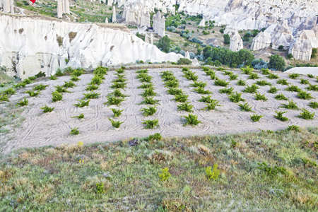 Areial view of farmland, potato crops and limestone evolution in Cappadocia, Turkey