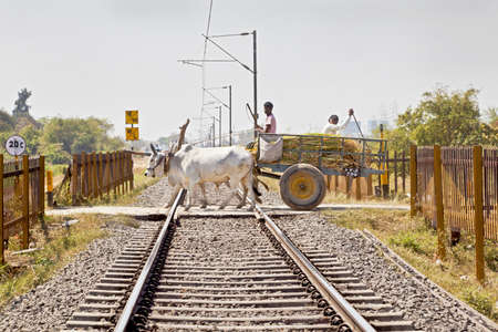 bullock: andscape of railroad tracks a bullock cart carrying farm produce crosses a barrier free level crossing track is cutting acrosss rural countryside along  outskirts of village towards the city of Surat Editorial